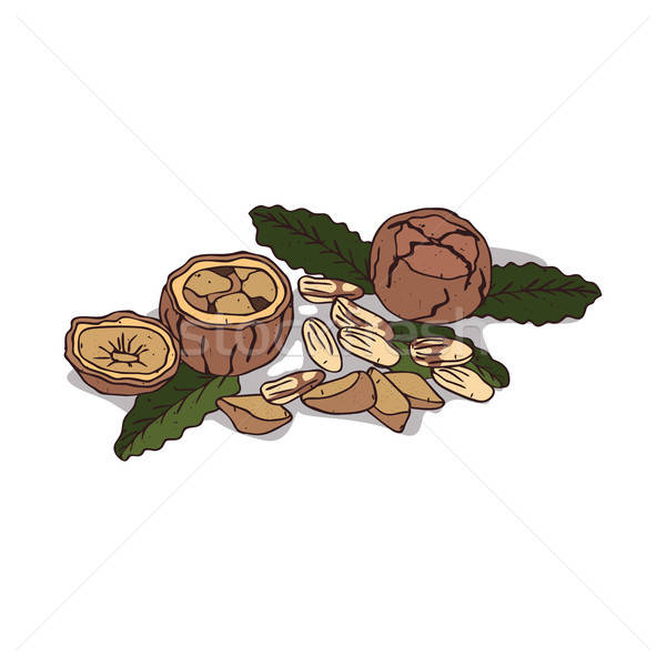 Isolated clipart Brazil nut Stock photo © alexanderandariadna
