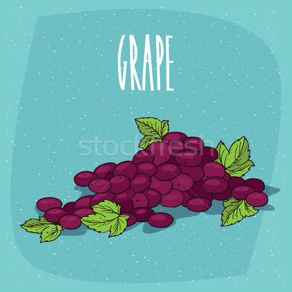 Isolated bunch of grapes or part of vine Stock photo © alexanderandariadna