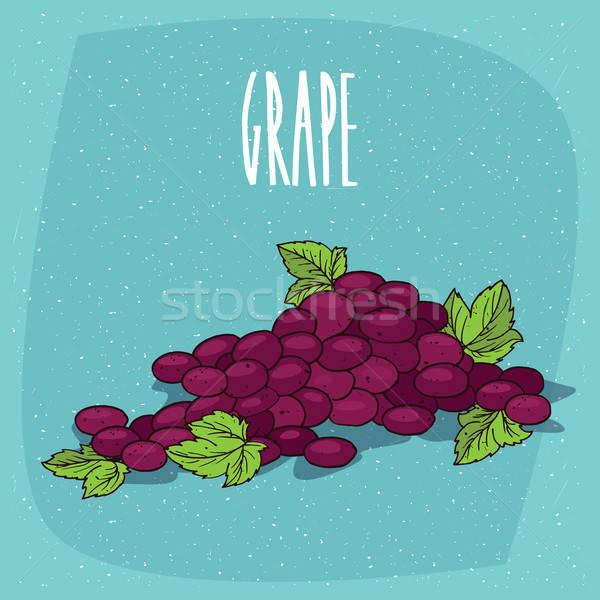 Isolado monte uvas videira maduro escuro Foto stock © alexanderandariadna