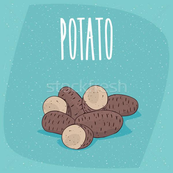 Isolated ripe russet potato tubers whole and cut Stock photo © alexanderandariadna