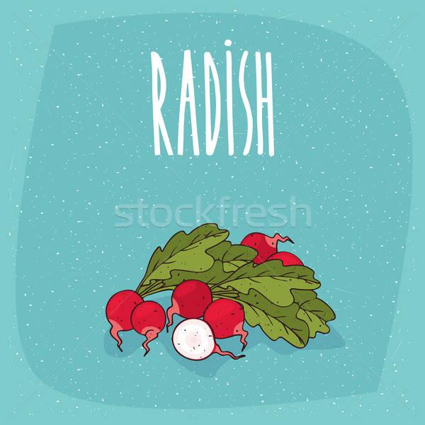 Isolated ripe root vegetables radish whole and cut Stock photo © alexanderandariadna