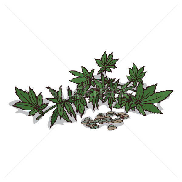 Isolated clipart Hemp Stock photo © alexanderandariadna