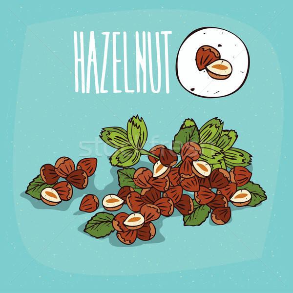 Set of isolated plant Hazelnut nuts herb Stock photo © alexanderandariadna
