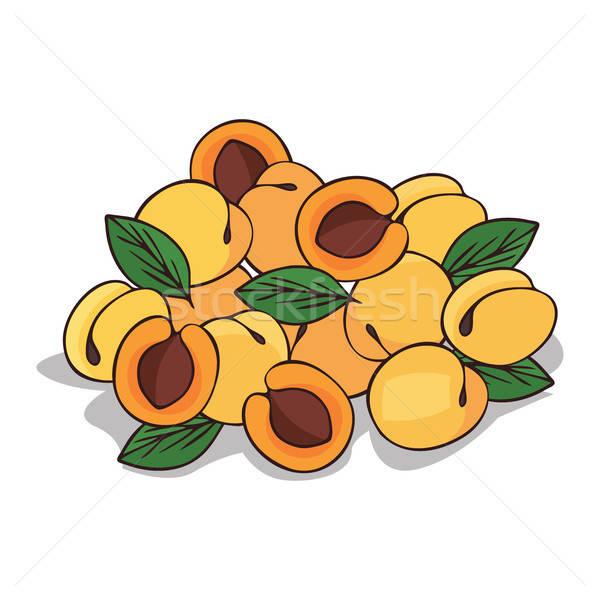 зрелый абрикос фрукты белый Сток-фото © alexanderandariadna