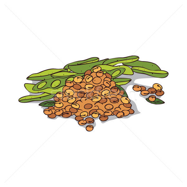 Isolated clipart Soybean Stock photo © alexanderandariadna