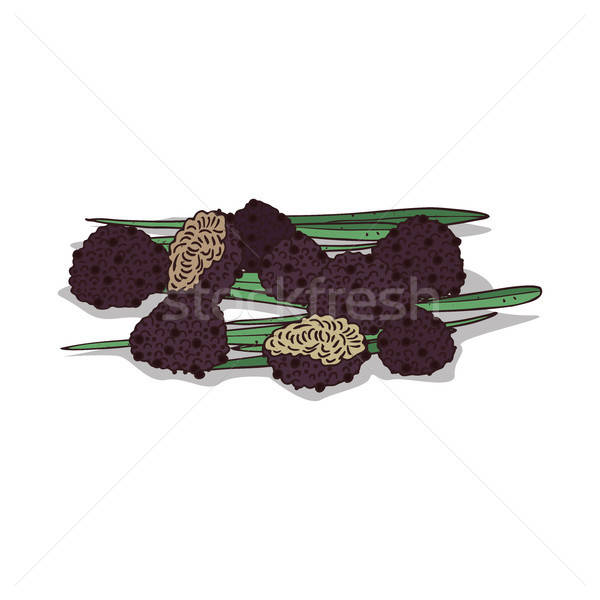 Isolated clipart Truffle Stock photo © alexanderandariadna