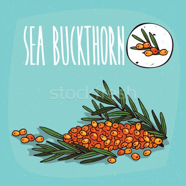 Ingesteld geïsoleerd plant zee vruchten kruid Stockfoto © alexanderandariadna