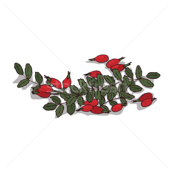 Isolated clipart Rose hips Stock photo © alexanderandariadna