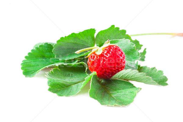 Aardbeien macro bladeren geïsoleerd witte voedsel Stockfoto © alexandkz