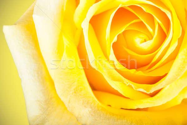 Peu profond accent photo jaune rose Photo stock © alexandkz