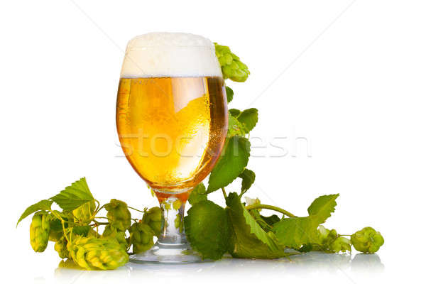 Hop cones with beer isolated on white Stock photo © alexandkz