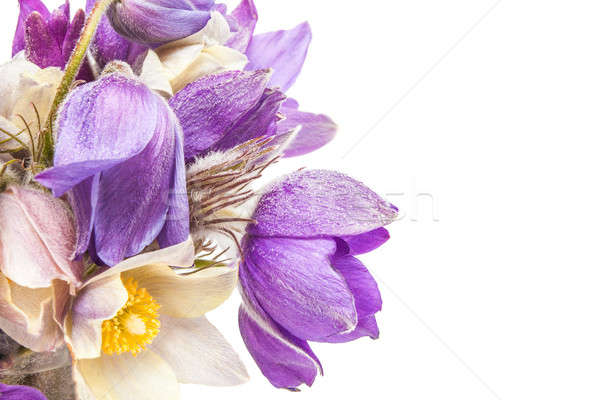 Flores da primavera vidro água isolado primavera natureza Foto stock © alexandkz