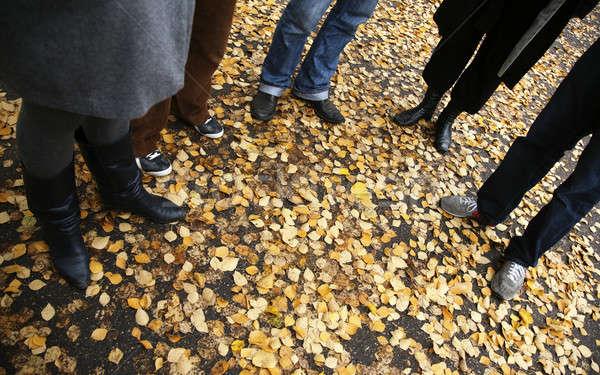 autumn leaves carpet Stock photo © alexandre_zveiger