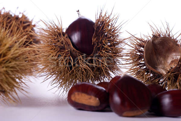 chestnut burs Stock photo © alexandrenunes