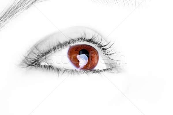 Great big brown eye Stock photo © alexandrenunes