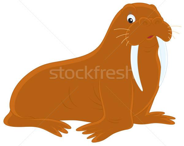 морж вектора clipart иллюстрация большой природы Сток-фото © AlexBannykh