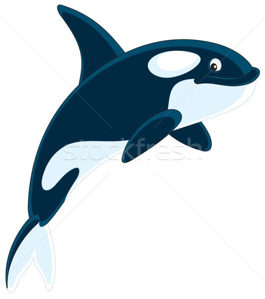 Сток-фото: убийца · кит · вектора · clipart · иллюстрация · плаванию