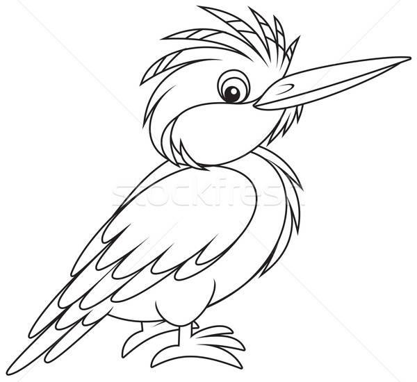 Eisvogel Natur Vogel Tier Zeichnung Vektor Stock foto © AlexBannykh