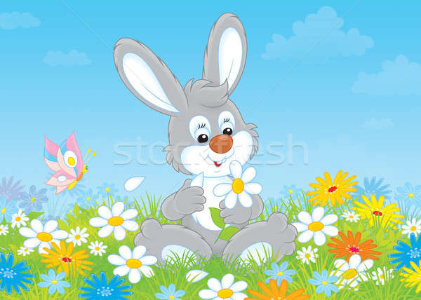 Bunny with a daisy Stock photo © AlexBannykh