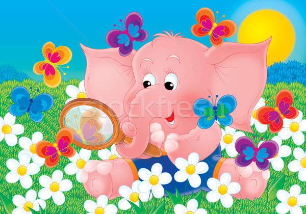 Rosa elefante borboletas pequeno colorido campo Foto stock © AlexBannykh