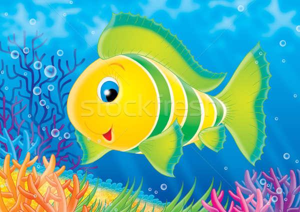 Сток-фото: коралловые · рыбы · тропические · рыбы · плаванию · красочный · коралловый · риф