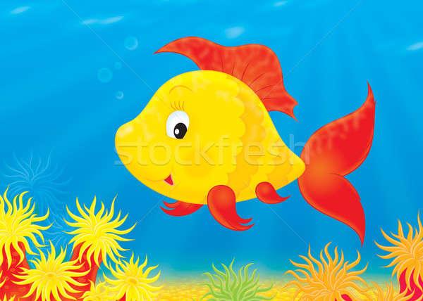 Tropical fish Stock photo © AlexBannykh