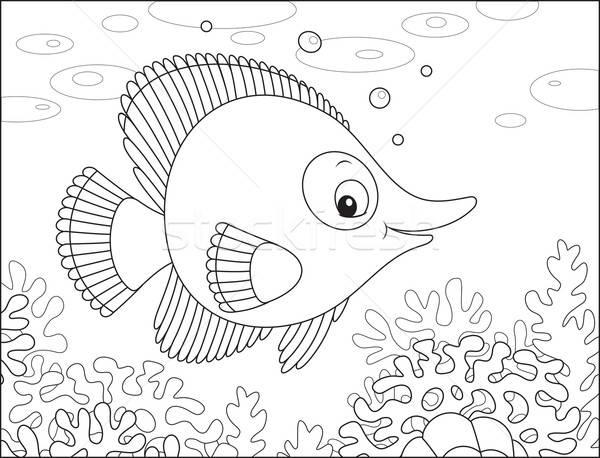 Trópusi hal citromsárga egzotikus hal úszik korallzátony Stock fotó © AlexBannykh