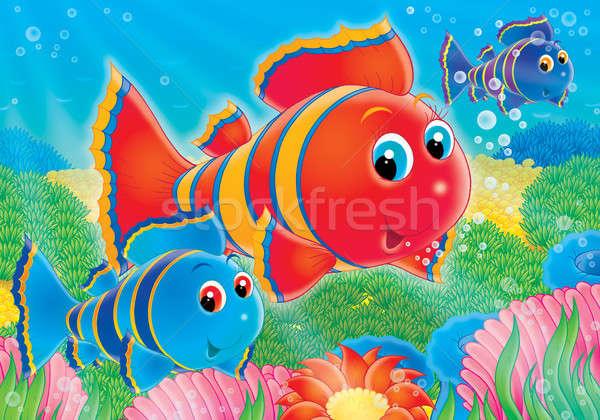 Coral fish Stock photo © AlexBannykh