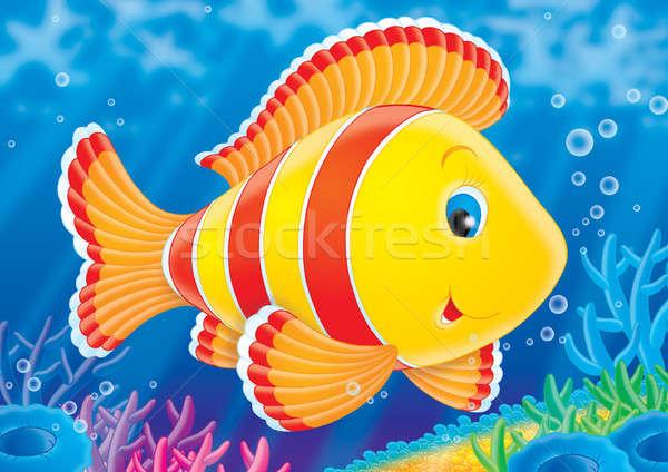 Koraal vis tropische vissen zwemmen kleurrijk koraalrif Stockfoto © AlexBannykh