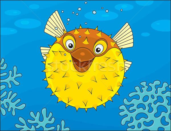 Puffer fish Stock photo © AlexBannykh