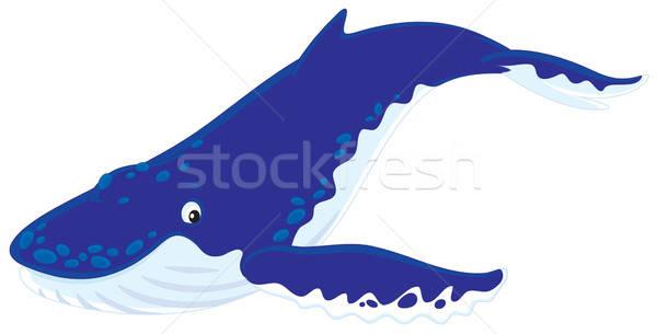 Hump-backed whale Stock photo © AlexBannykh