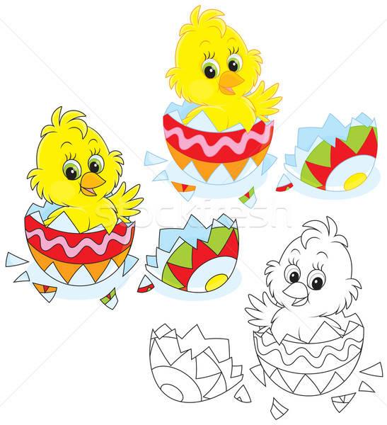 Easter Chick Stock photo © AlexBannykh