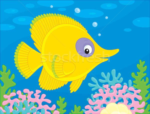 Peixe tropical amarelo exótico peixe natação Foto stock © AlexBannykh
