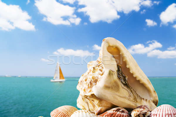Verão grande concha turva marinha veleiro Foto stock © alexeys