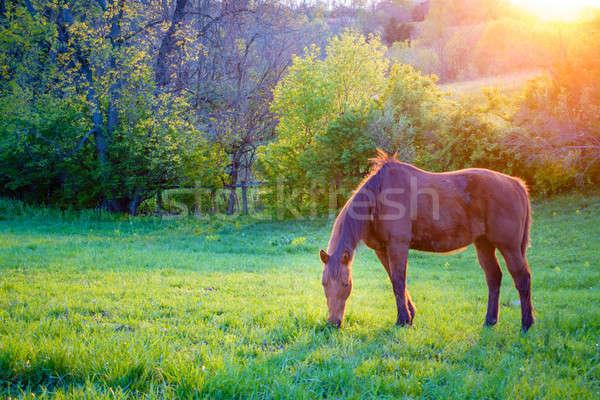 лошади красивой каштан кобыла фермы центральный Сток-фото © alexeys