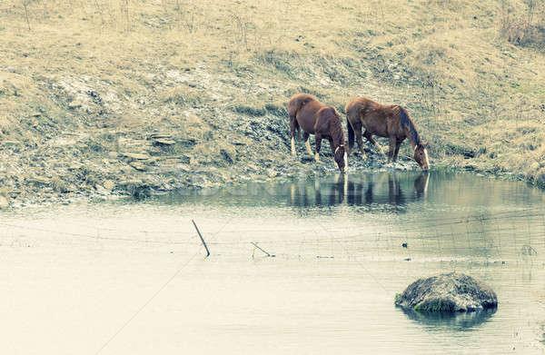 Horses drinking Stock photo © alexeys