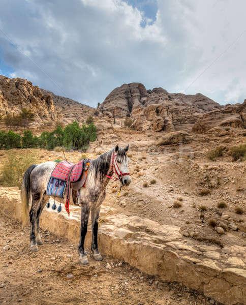 Petra horse Stock photo © alexeys