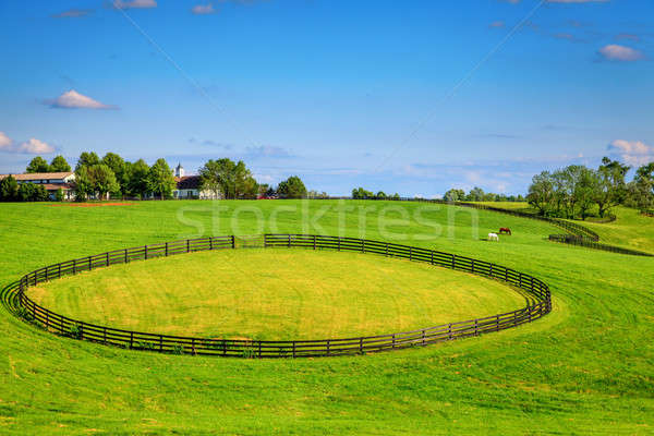 Horse farm fences Stock photo © alexeys