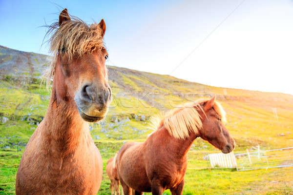Ferme Islande ciel nature cheval agriculture Photo stock © alexeys