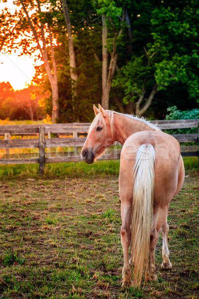 At çiftlik güzel ayakta çit gün batımı Stok fotoğraf © alexeys