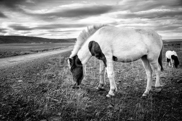 ポニー リモート 砂利道 アイスランド 黒白 治療 ストックフォト © alexeys