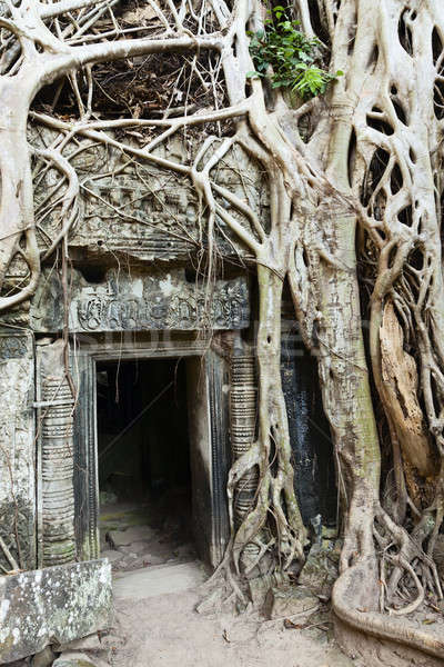 Ta Prohm Stock photo © alexeys