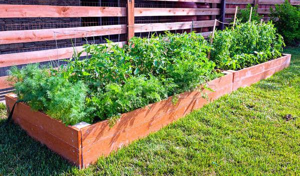 Légumes jardin faible côté maison nature Photo stock © alexeys