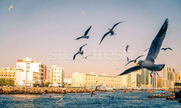 Seagulls over Dubai Creek Stock photo © alexeys