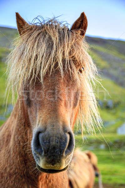 пони портрет фермы Исландия небе Сток-фото © alexeys
