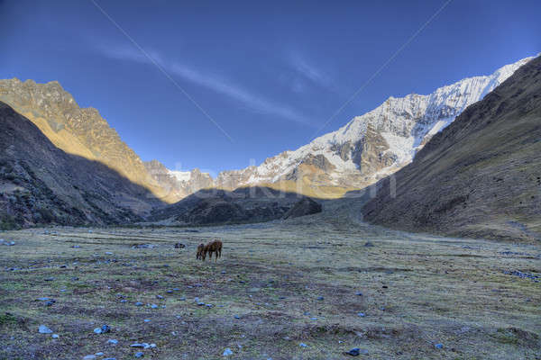 Morning in the Andes  Stock photo © alexeys