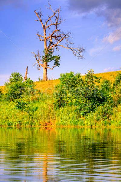 Egyedüli fa kép öreg meztelen tó Stock fotó © alexeys