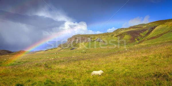 Rain over pasture Stock photo © alexeys