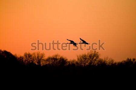 Migration Stock photo © alexeys