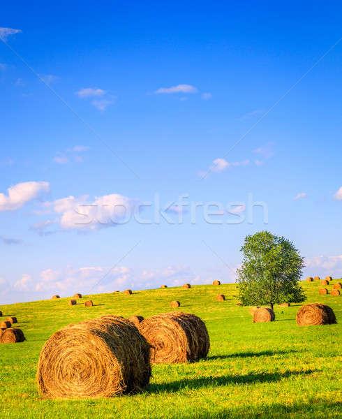 Summer field Stock photo © alexeys